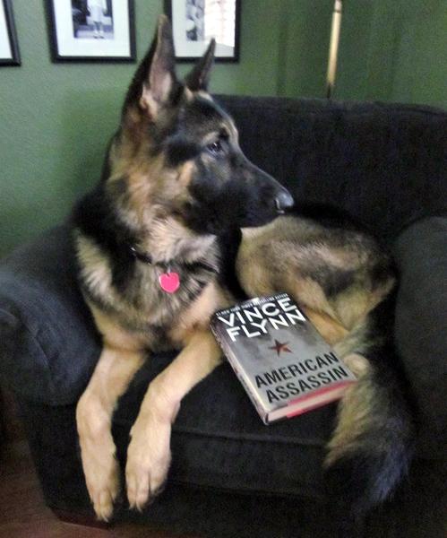 Fritz-reading-my-favorite-book-in-my-favorite-chair-in-Destin-Florida.JPG