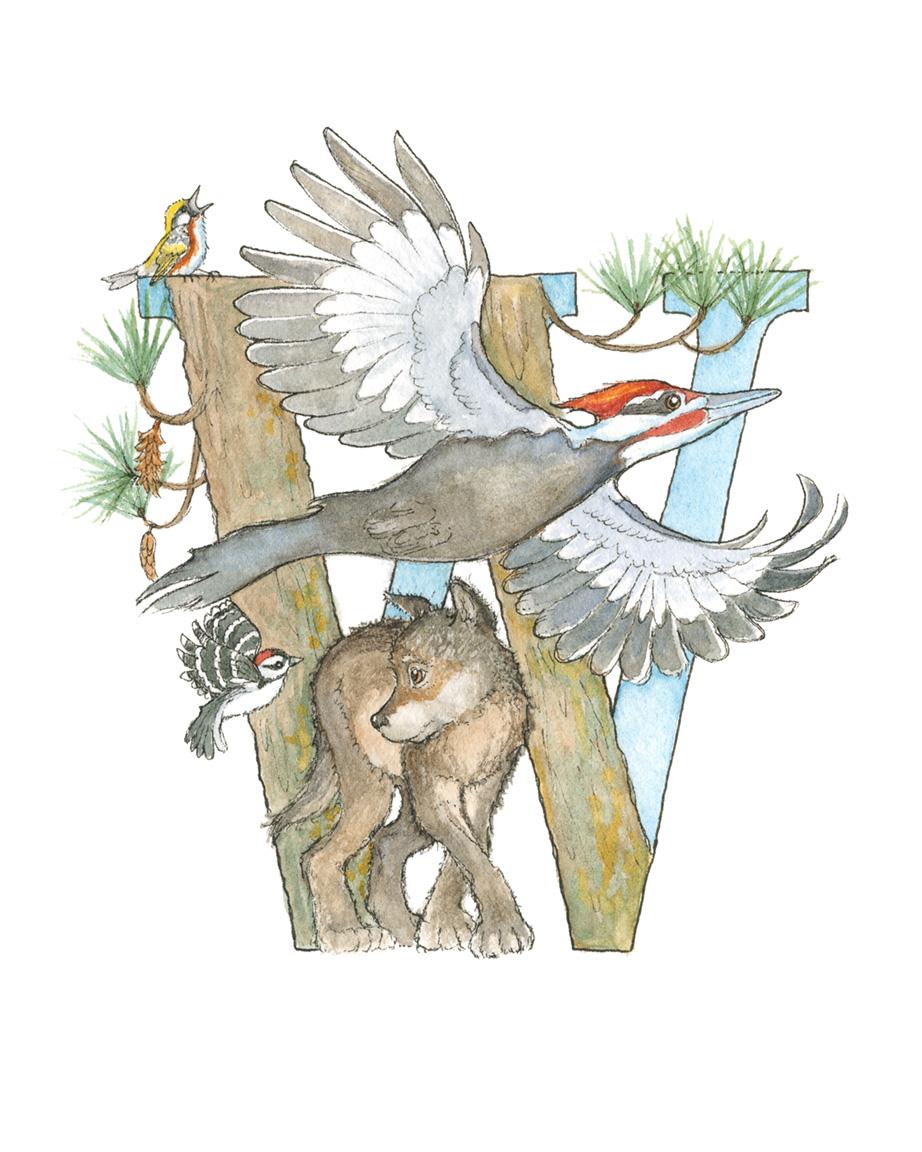 W - Wolf & Woodpeckers.jpg