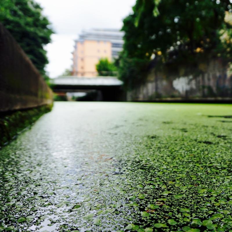 06 Regent's Canal.jpg