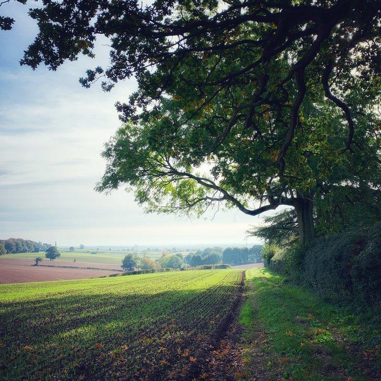 Walks -
