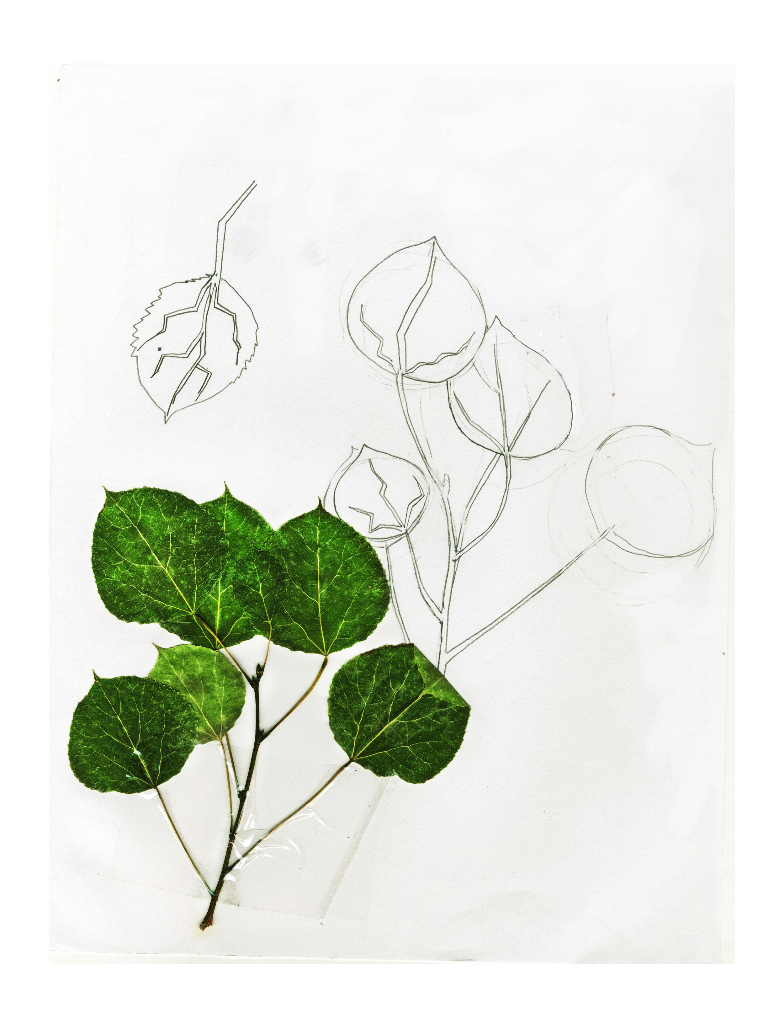leaf taxonomy (1).jpg
