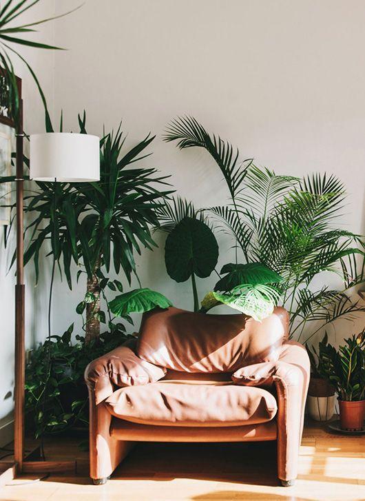 tropical beach escape house plants.jpg