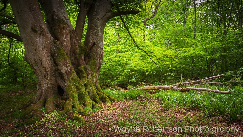 Landscape 092.jpg