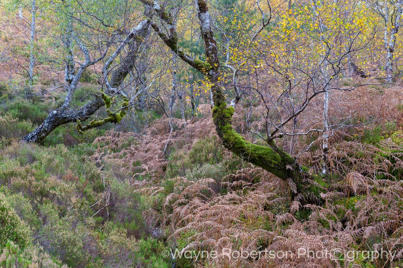Landscape-73.jpg