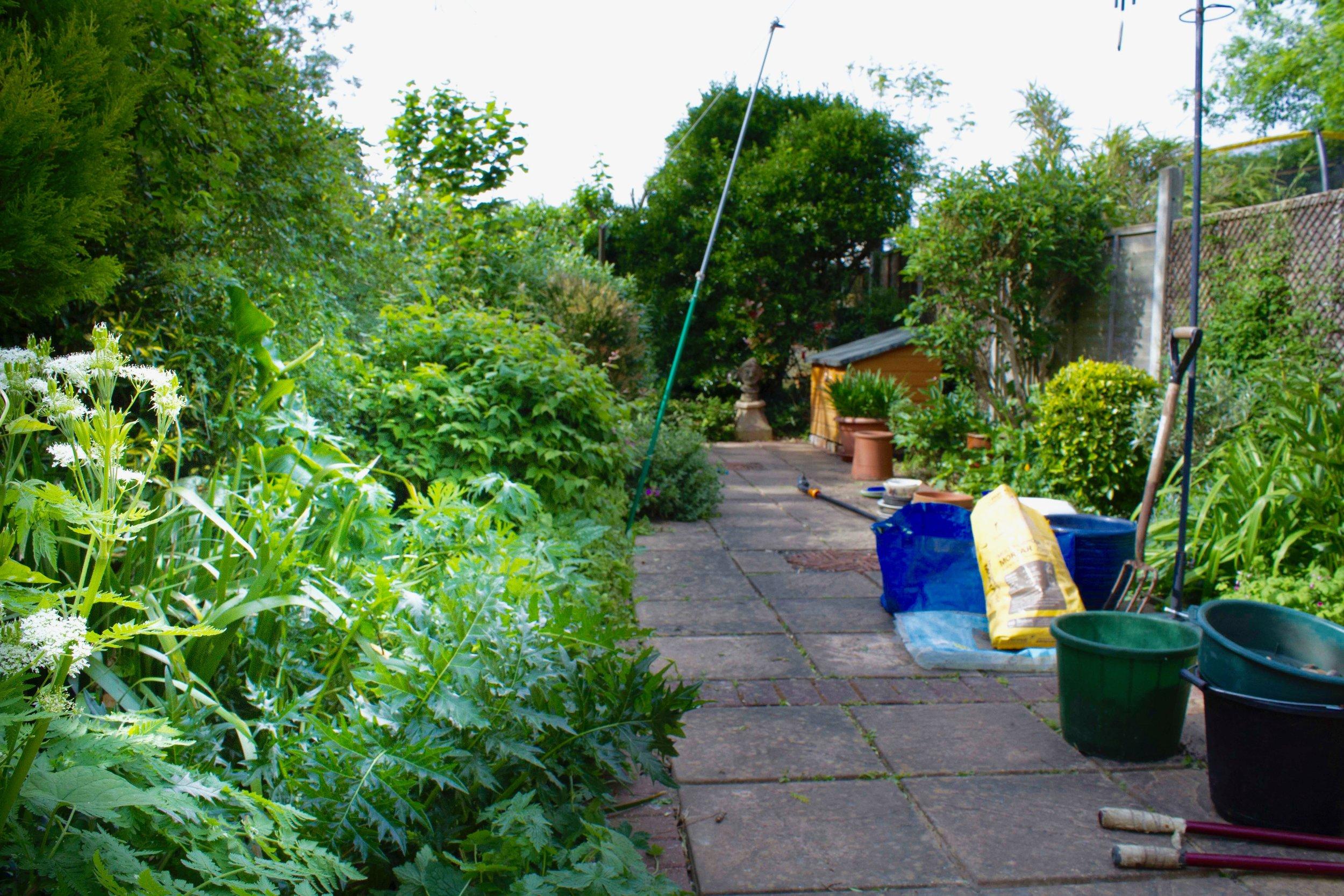 Peter Ball's Garden (1 of 1).jpg