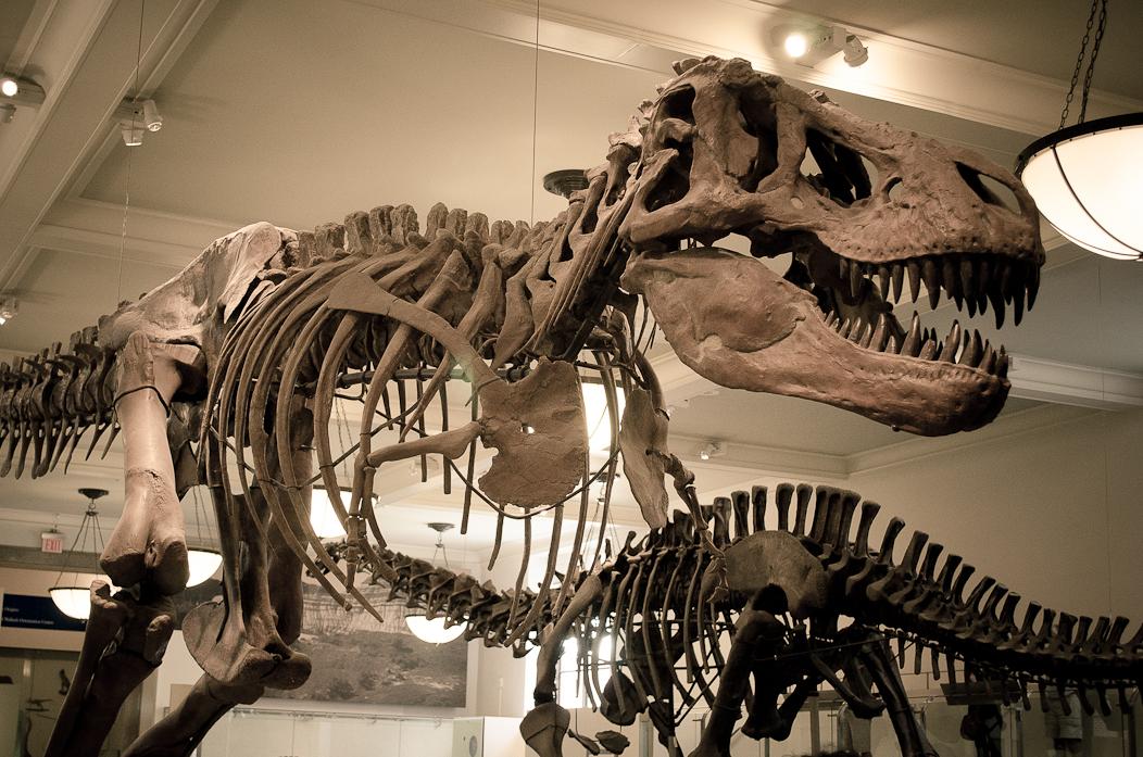 museu-historia-natural-nova-york.jpg