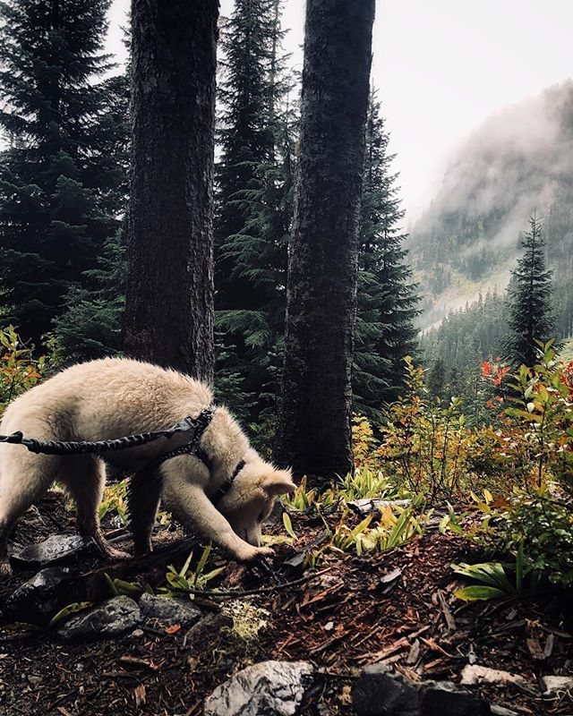 📍Snow Lake, Washington  This lake is the most visited lake in the Alpine Lakes Wilderness! • It is about 6.4 miles round trip. • 1 hour away from Seattle • ***it is also Dog Friendly🐶*** #pnwonderland