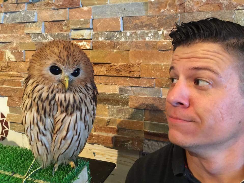 Owl+cafe.jpg