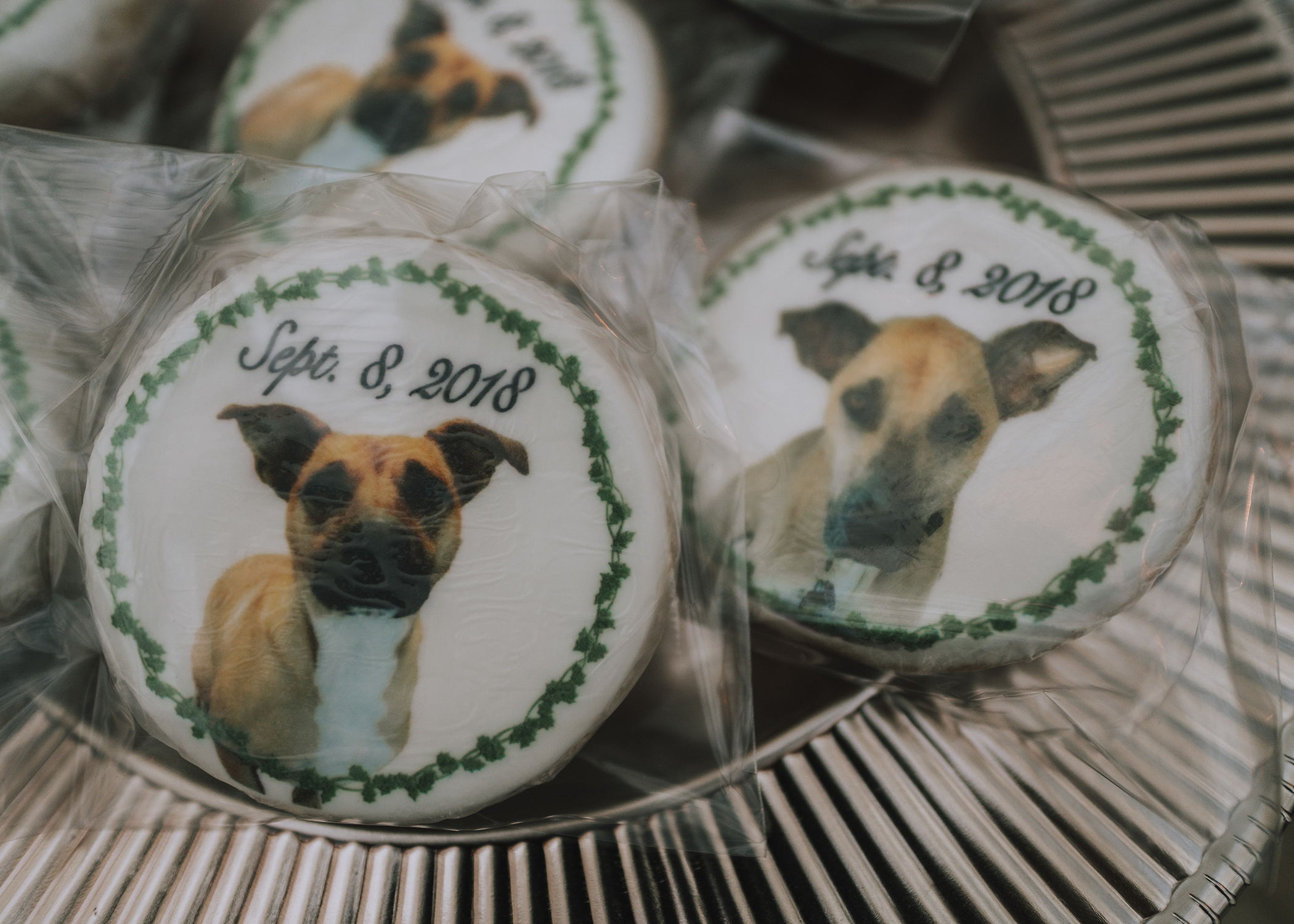 puppy cookies Foellinger-Freimann Botanical Conservatory indianapolis indiana hannah bergman Photography