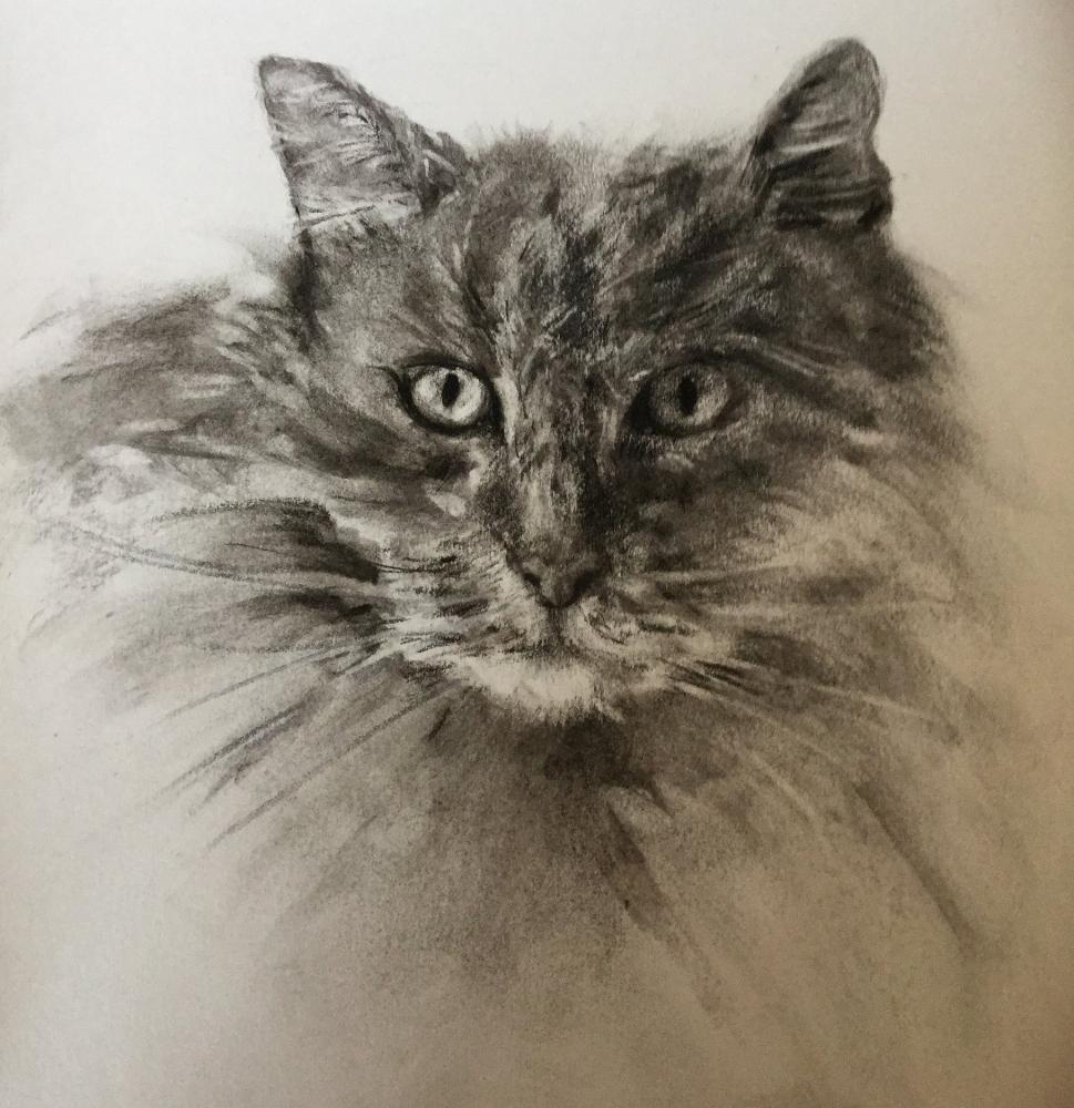 Harry Cat