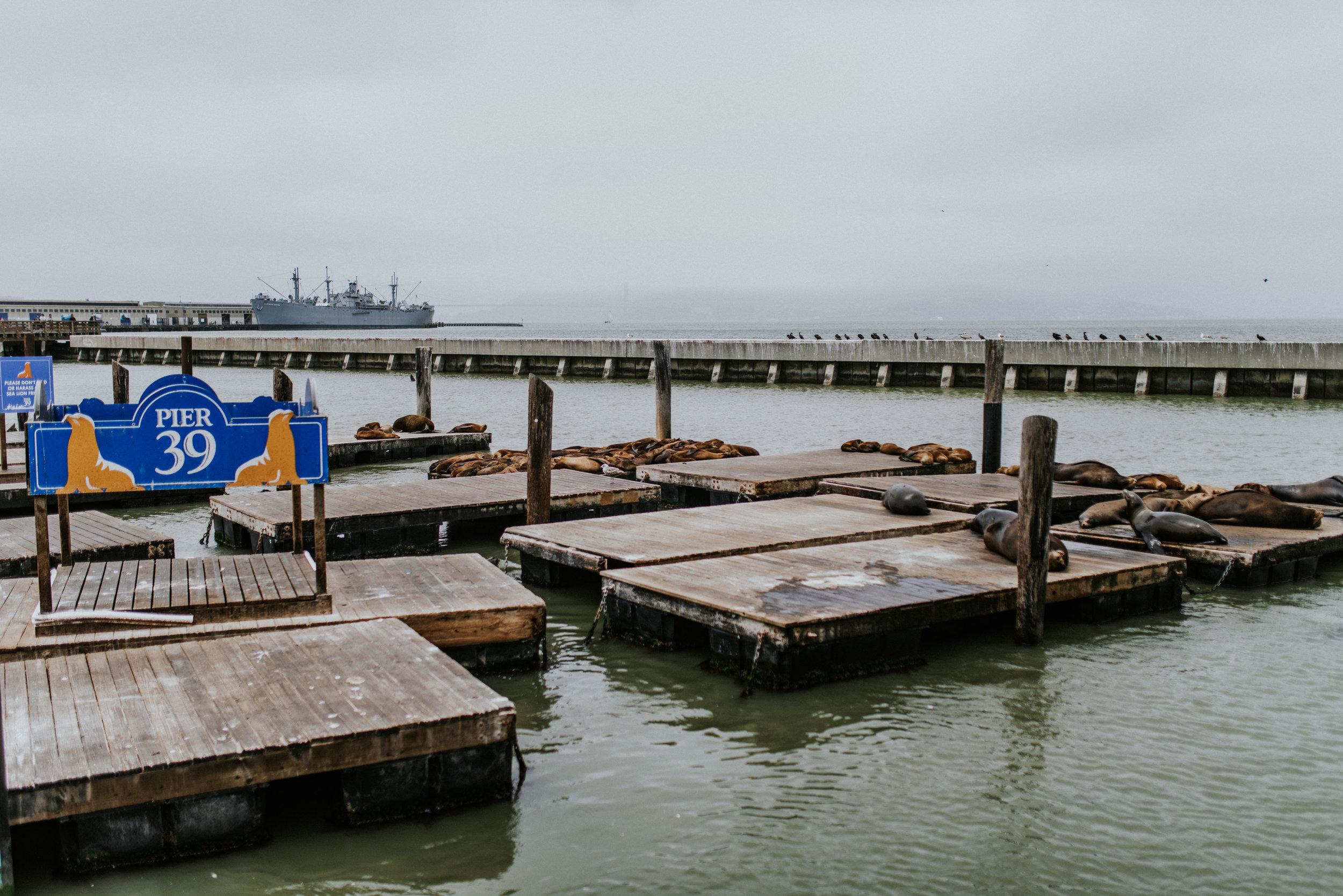 USA 2018 - San Francisco-84.jpg
