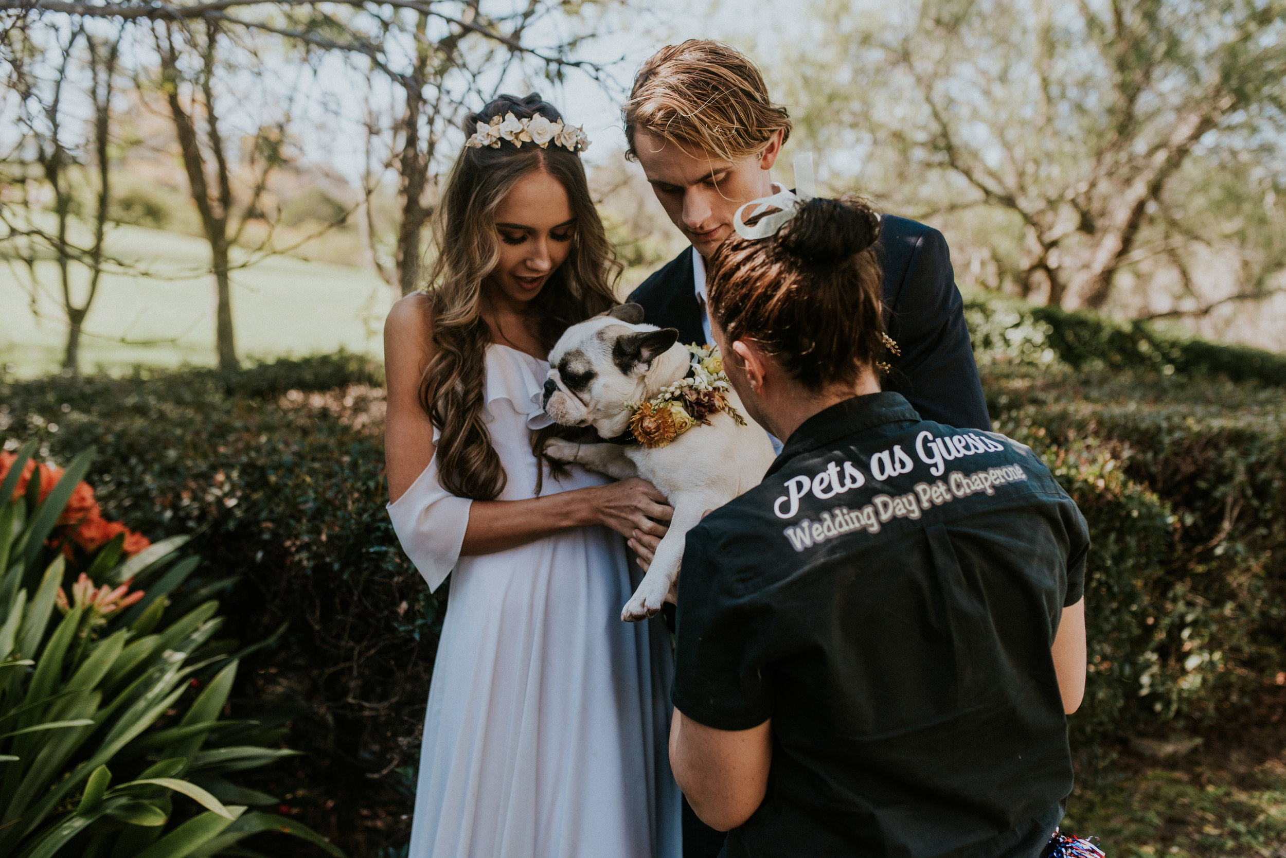 Pet Chaperone -   Pets as Guests: Wedding Day Pet Chaperone