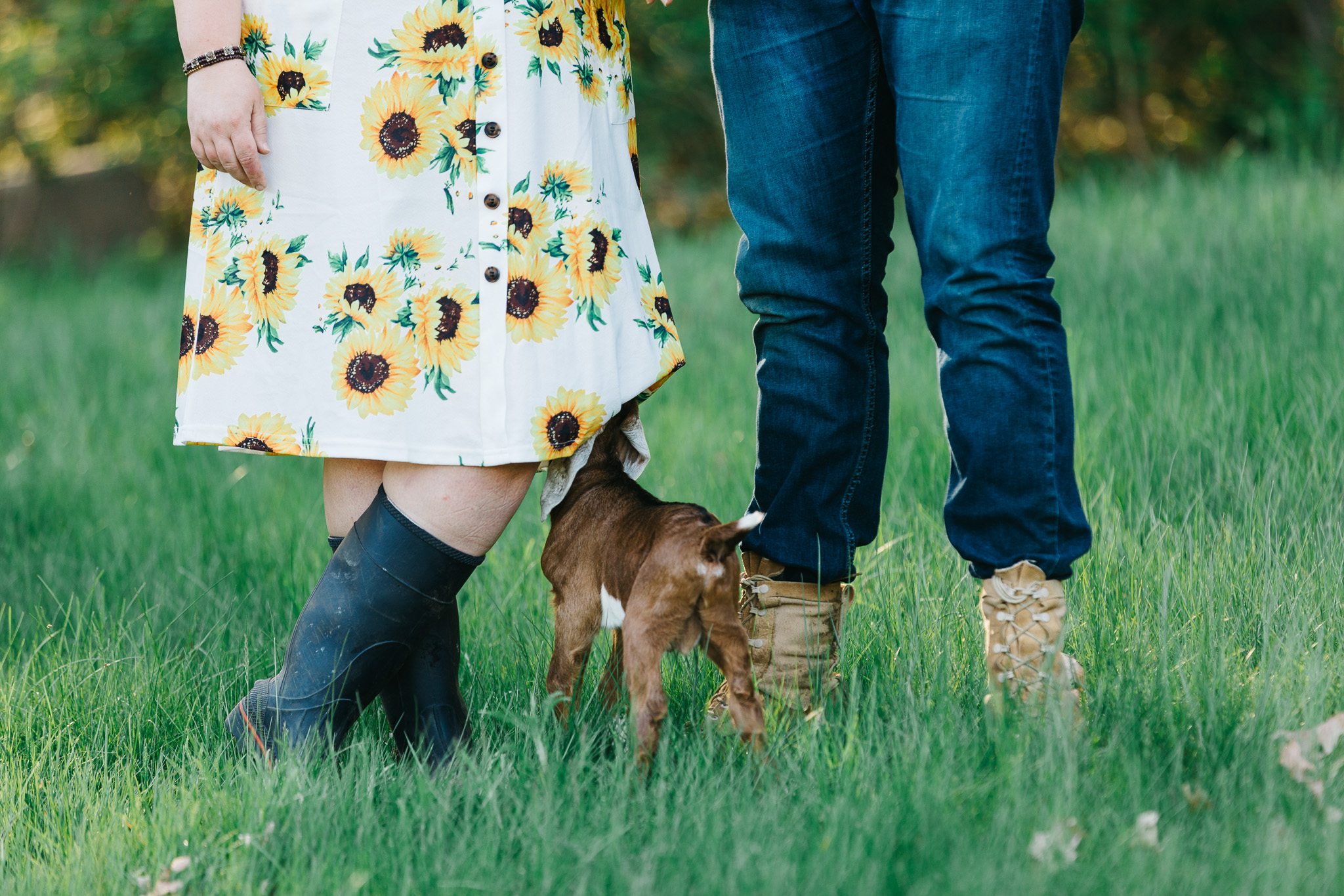 Baby goat nibbling on the dress during an engagement session on a farm.