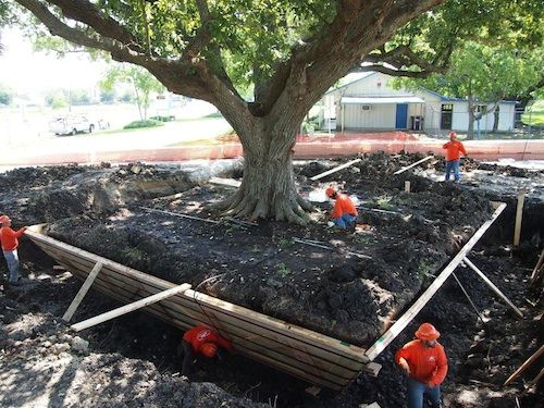 Neighborhood tree being relocated in League City.