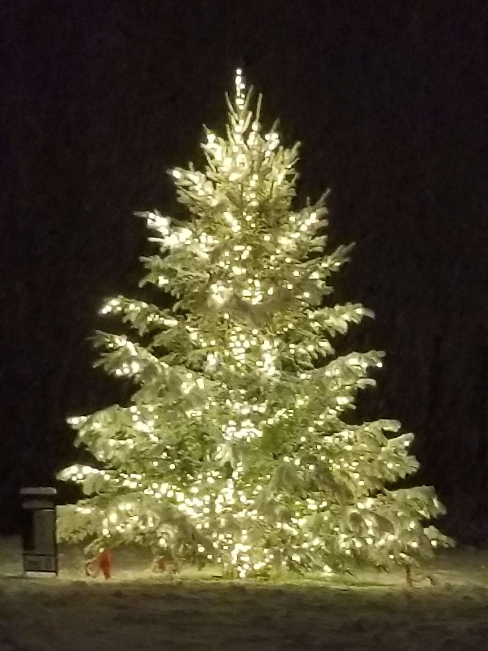 Christmas Tree at Harbor Park