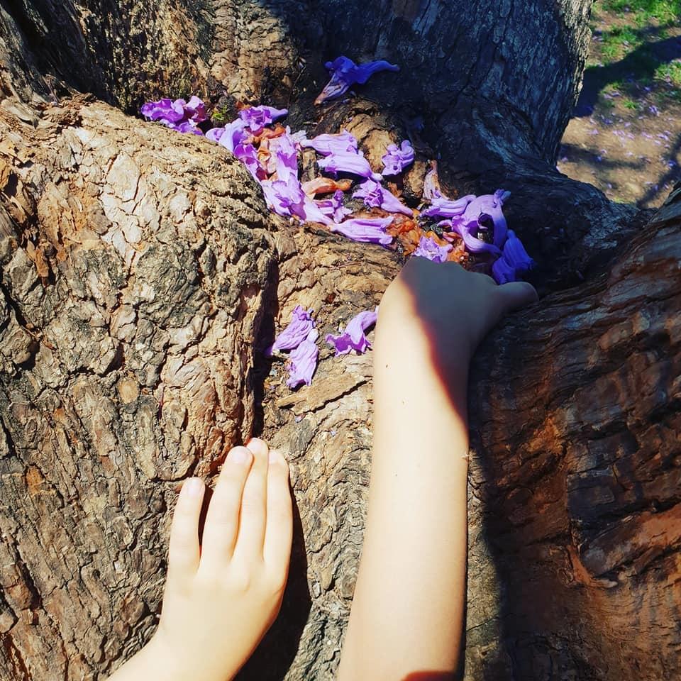 jacaranda petals.jpg