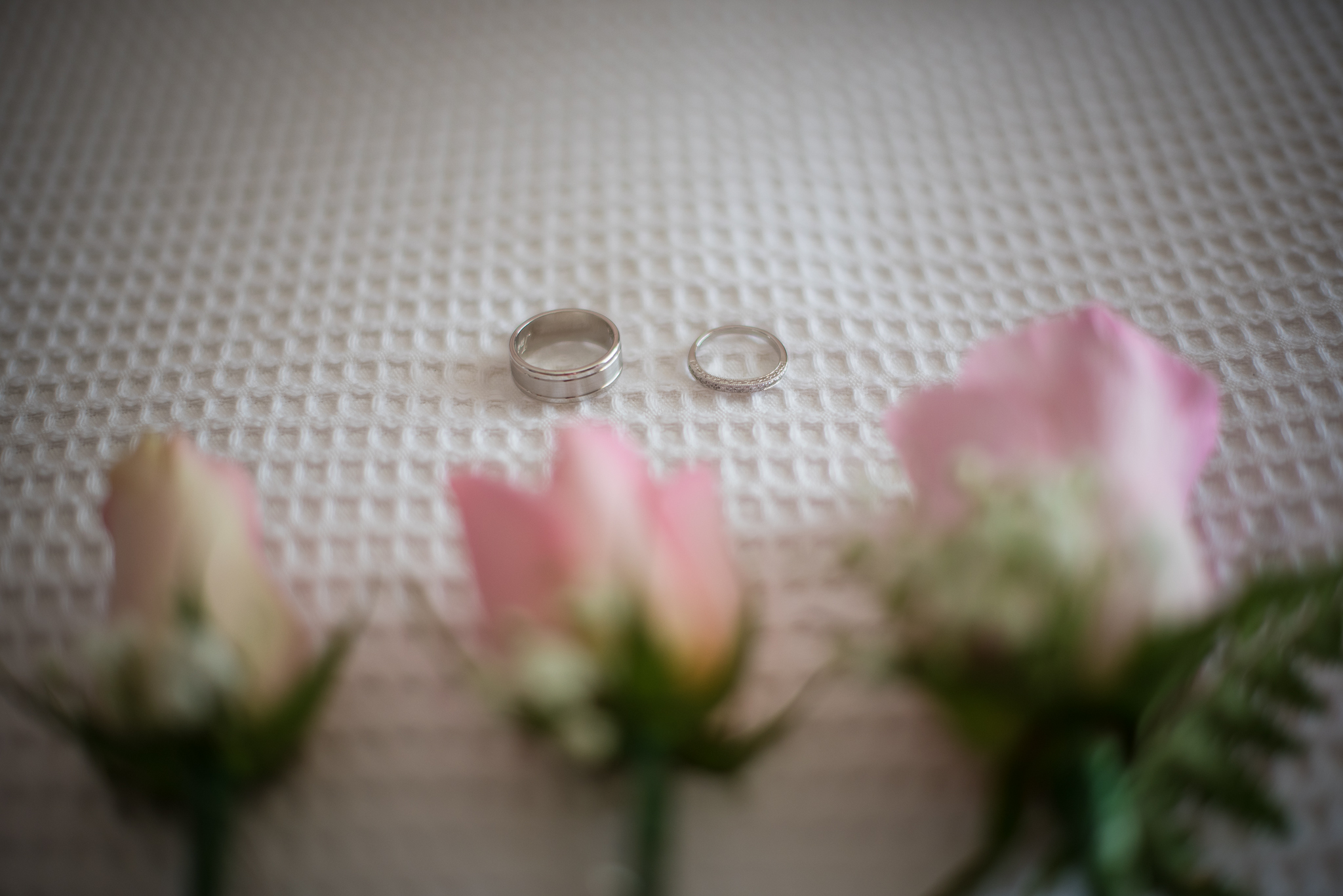 close up of the wedding rings by panoramic photography