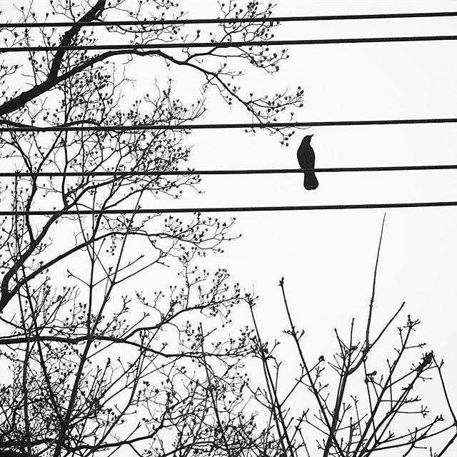 #birdonawire #bird #washingtondc  #winter