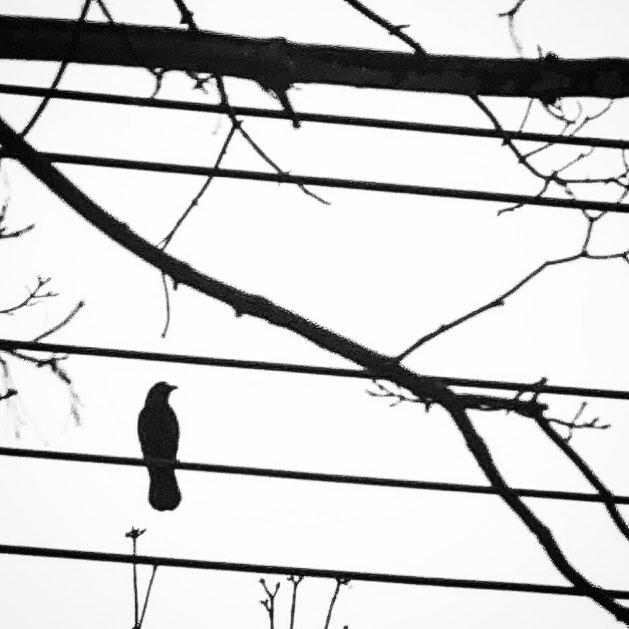 #birdonawire #bird #winter #washingtondc
