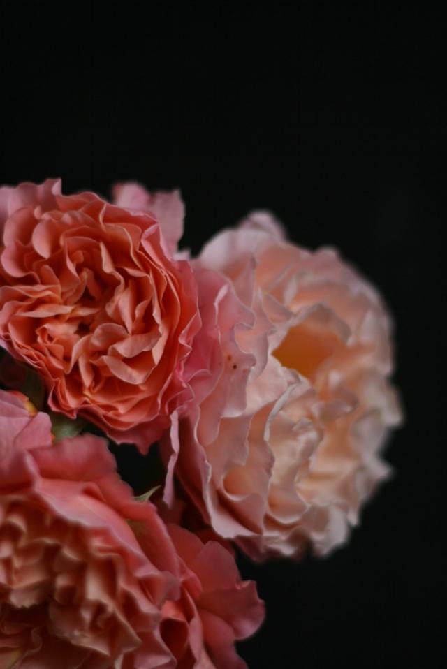 rosenrotes-schmuck
