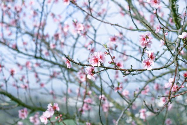 Studiorosenrotes-feiner Schmuck-Blütenfotografie.jpeg
