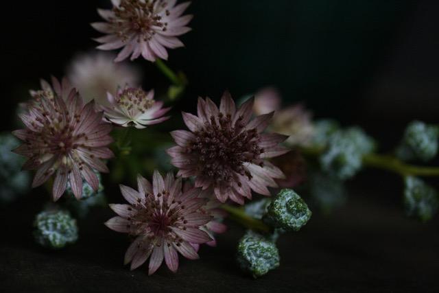 Studiorosenrotes-Blütenfotografie_IMG_3834 (1).jpeg