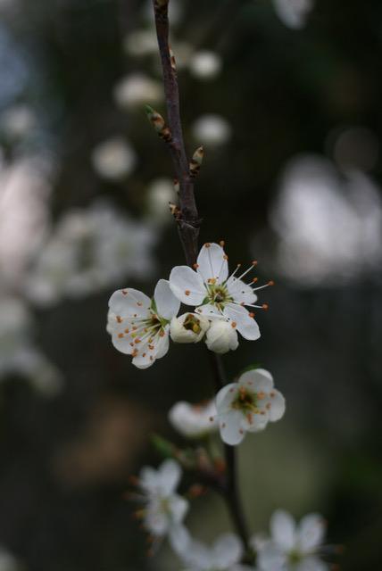 Blütenfotografie-Studio-rosenrotes-IMG_1897.jpeg