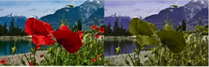 The two images contrast how the environment (left image) is seen through the eyes of a person with red-green blindness (right image).