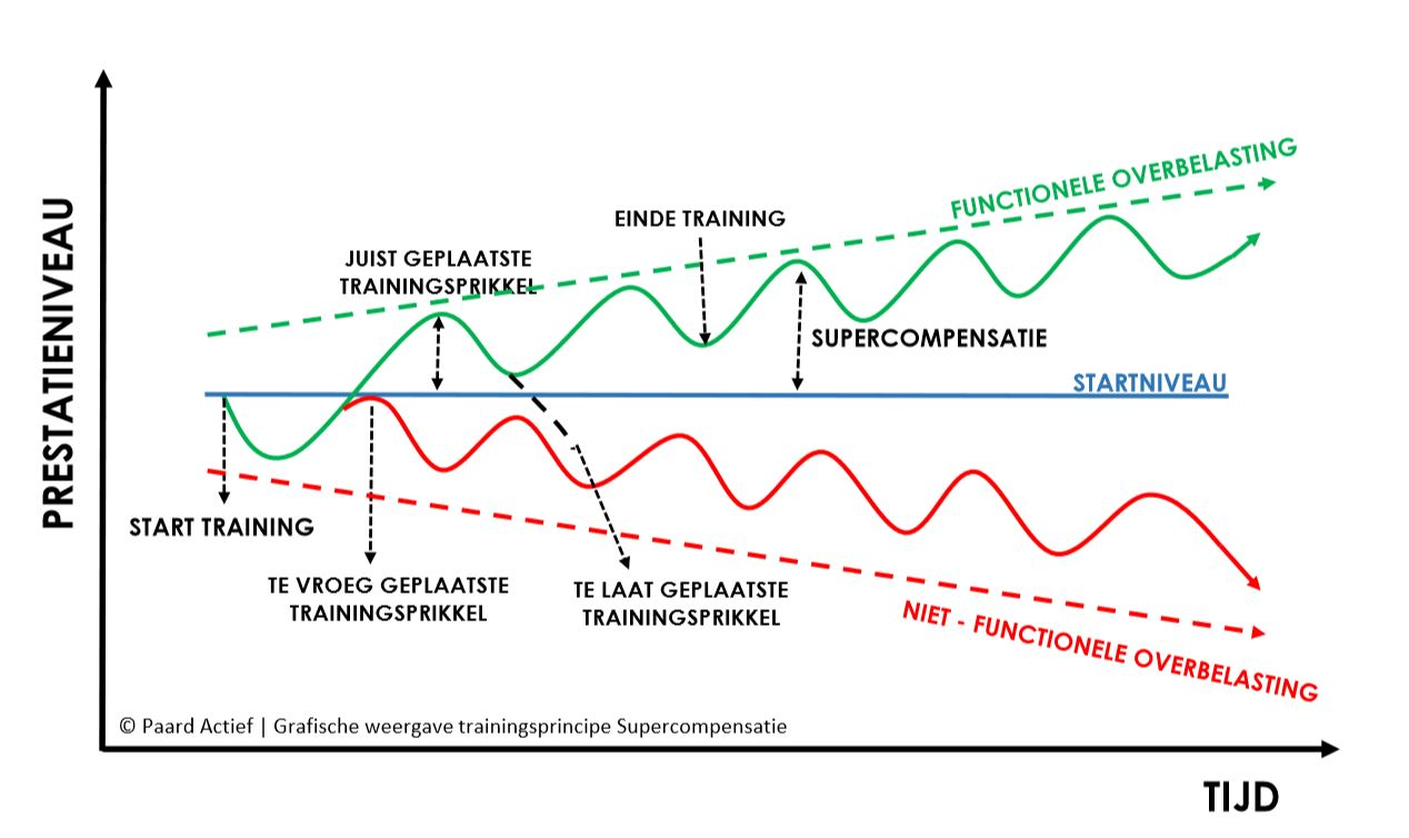 Supercompensatie grafiek Paard Actief.JPG