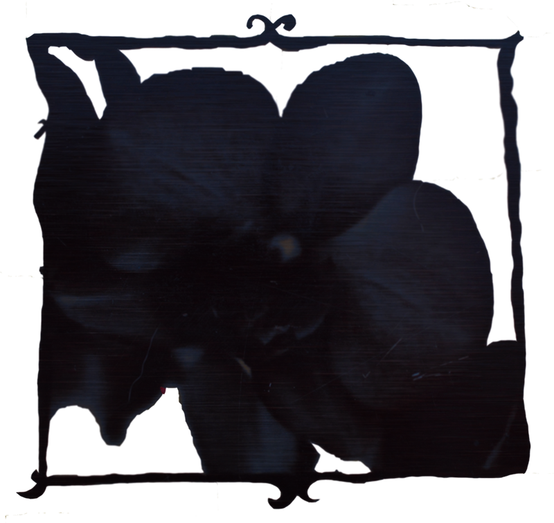 Black Orchid Small.png
