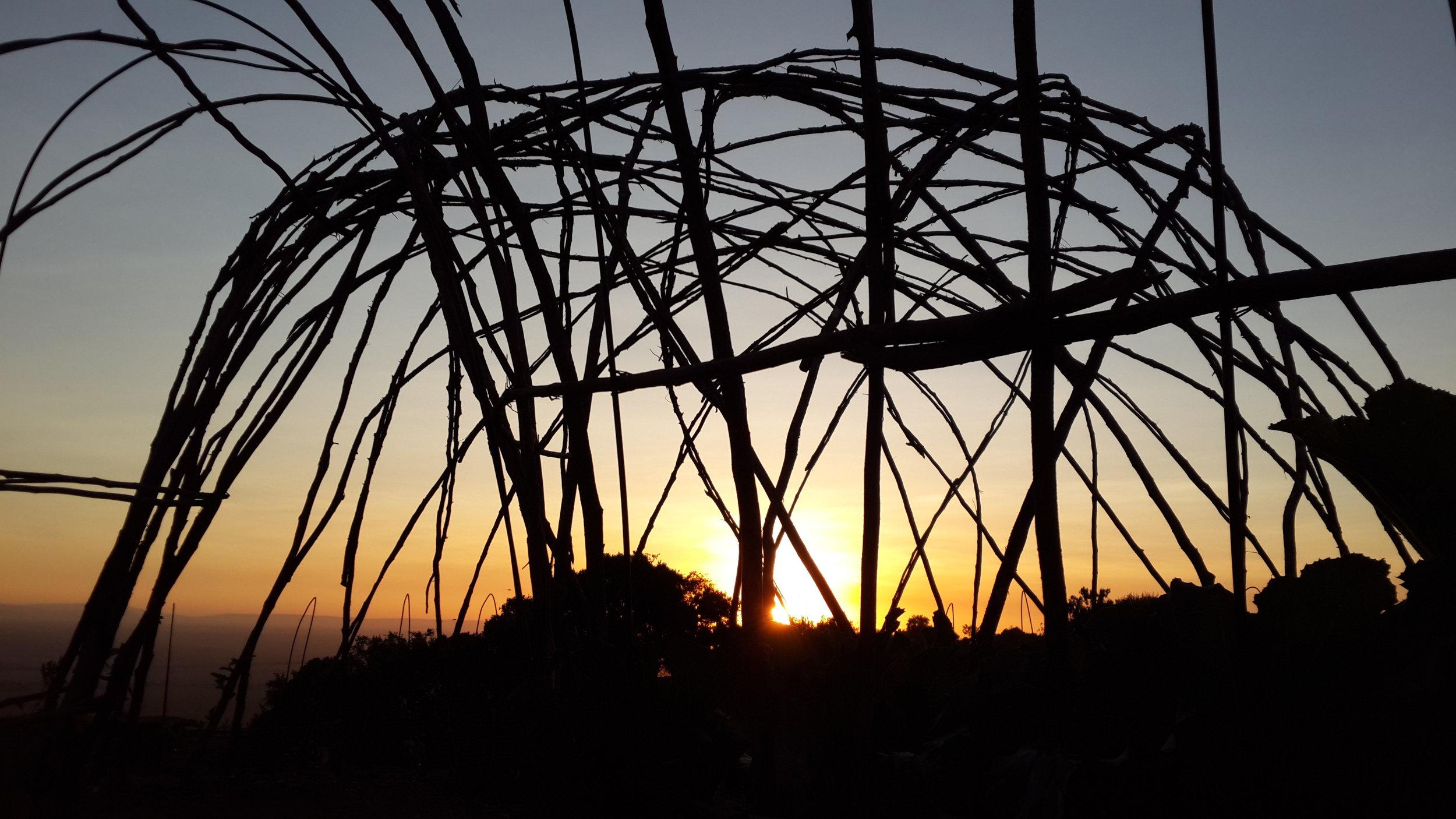granadilla arbor at first light.jpg
