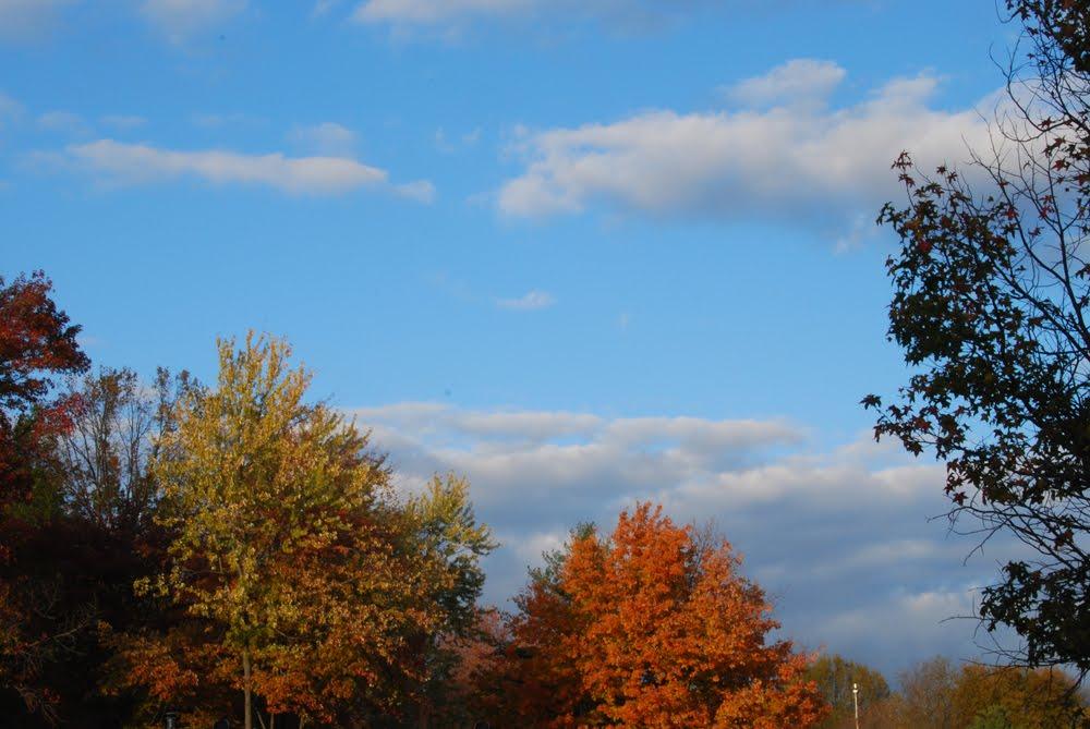 20121109-5-autumnal-sun1.jpg