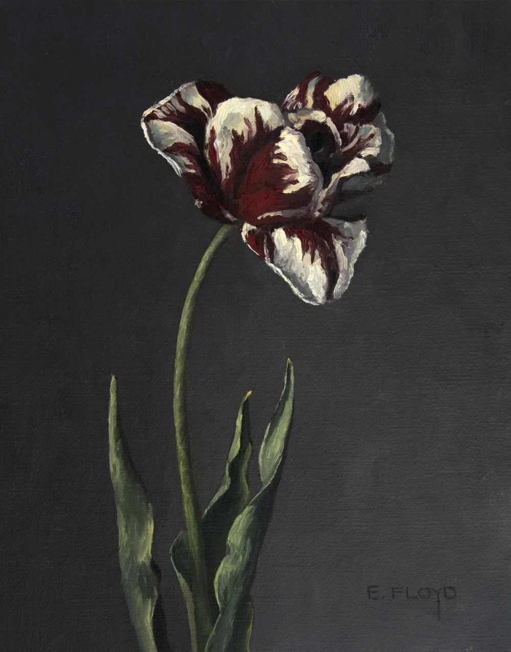 20150423-005-Rembrandt-Tulip-10x8-copy.jpg