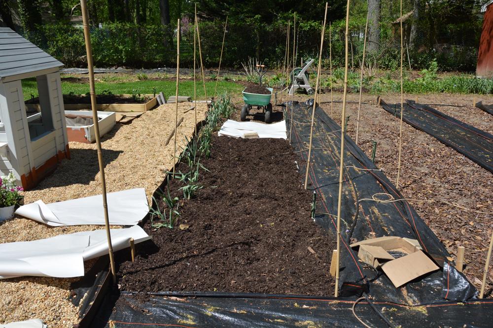 20170504-garden-update-06.jpg