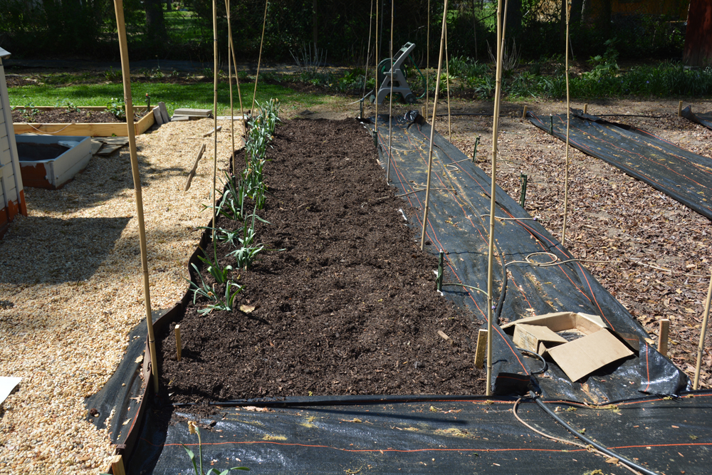 20170504-garden-update-07.jpg