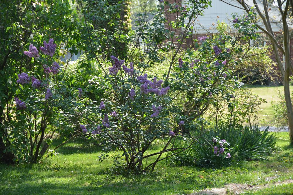 20170504-garden-update-10.jpg