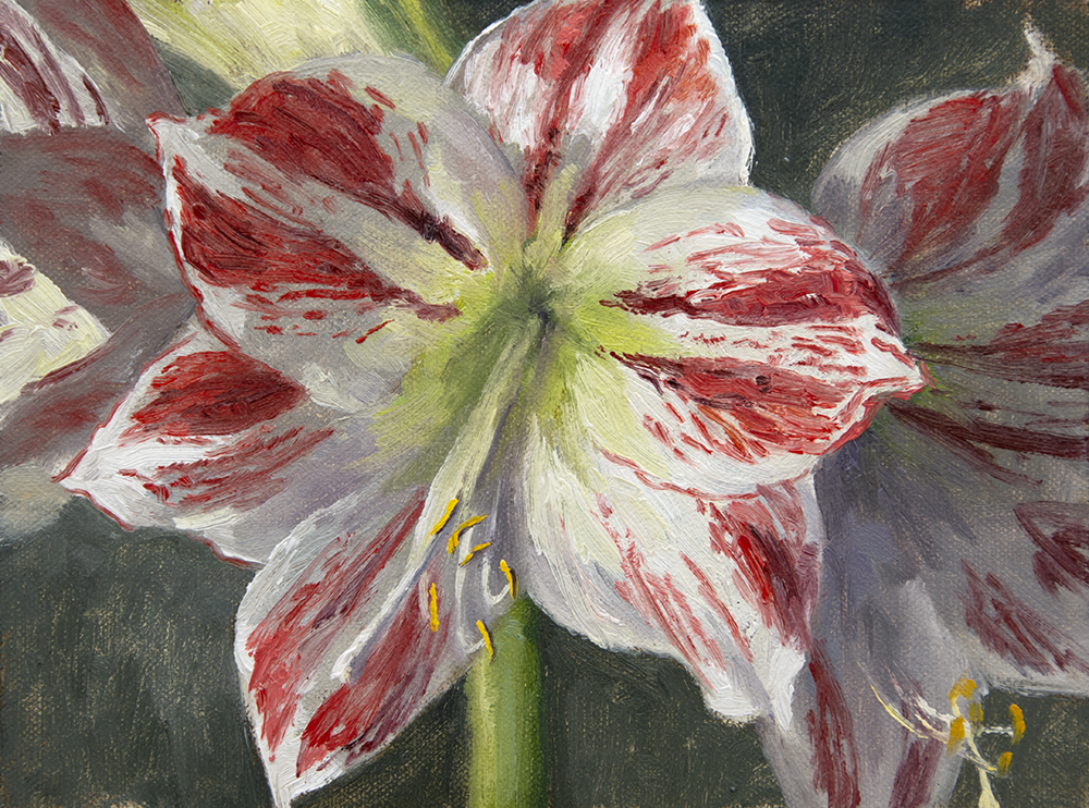 Day 7: Oil-sketch of Amaryllis Ambiance . ( Available )
