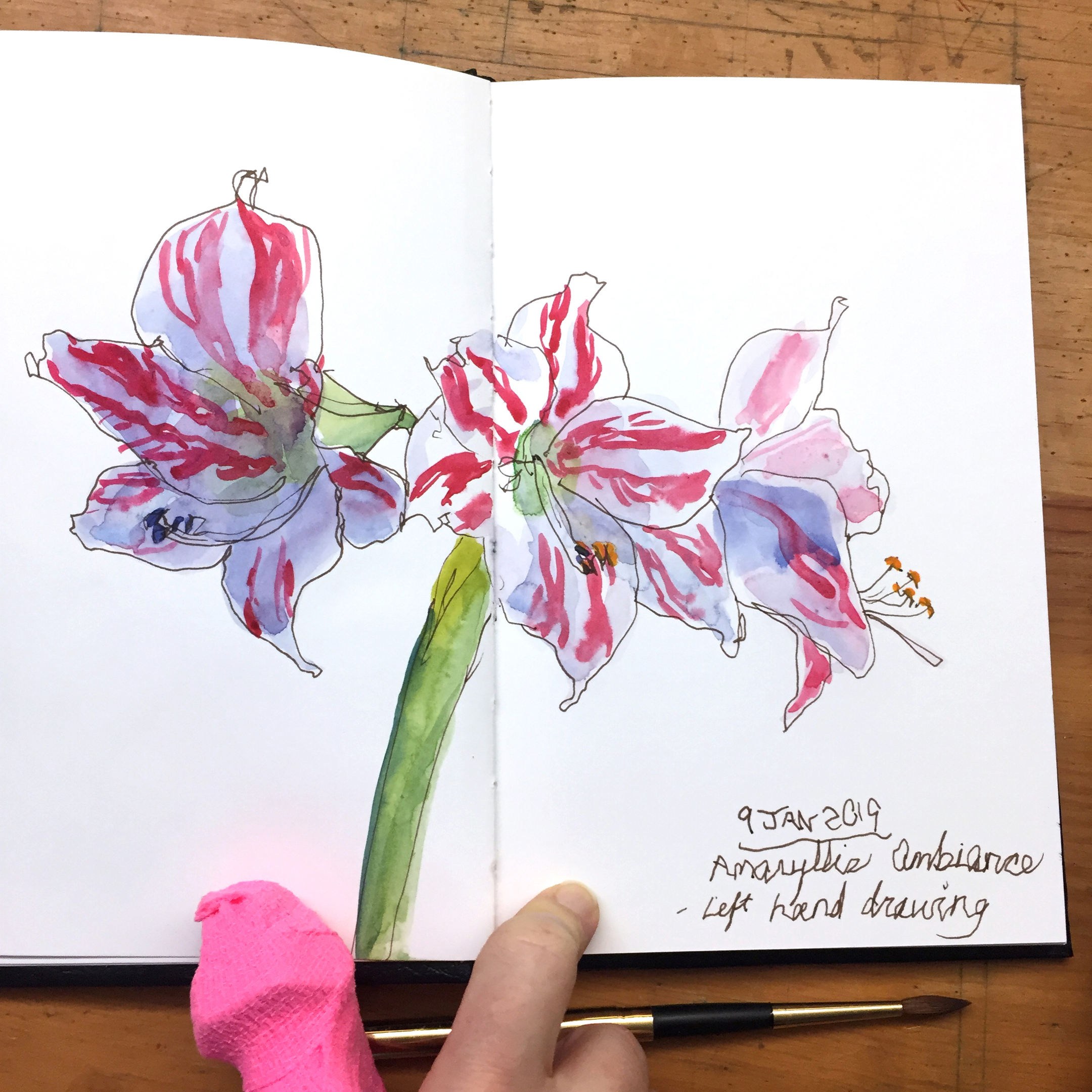 Day 9: Watercolor sketch of Amaryllis Ambiance using my left hand.