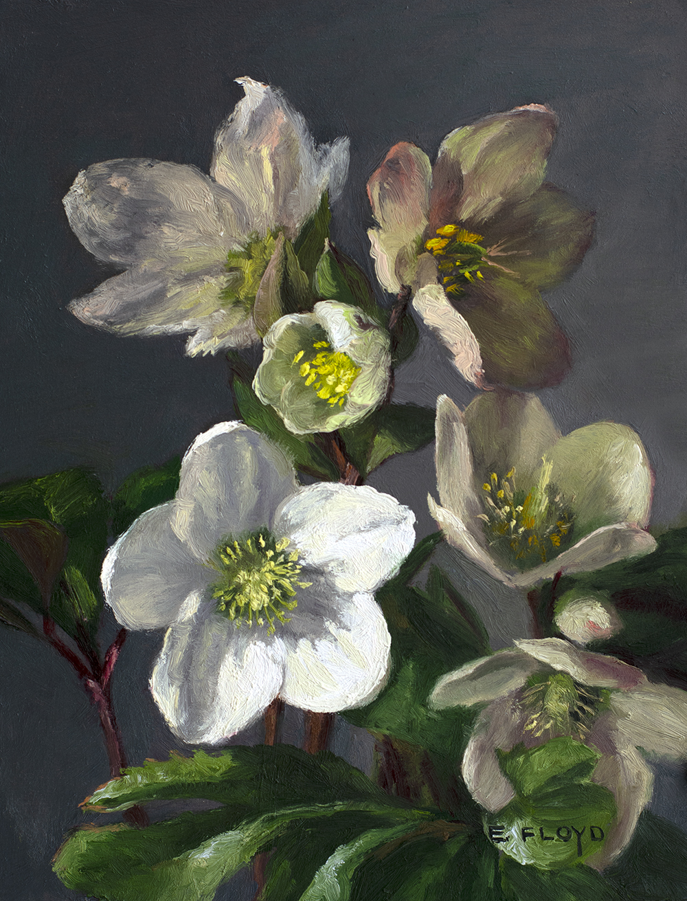 Hellebore, 9x7 inches, oil on panel, studio painting - framed, AVAILABLE, for more information info@principlegallery.com