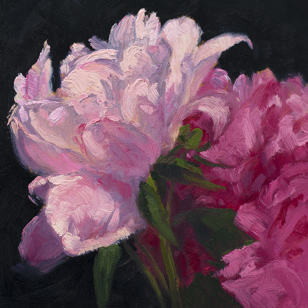 Day 135: Peonies, oil on cradled panel, 6 x 6 inches