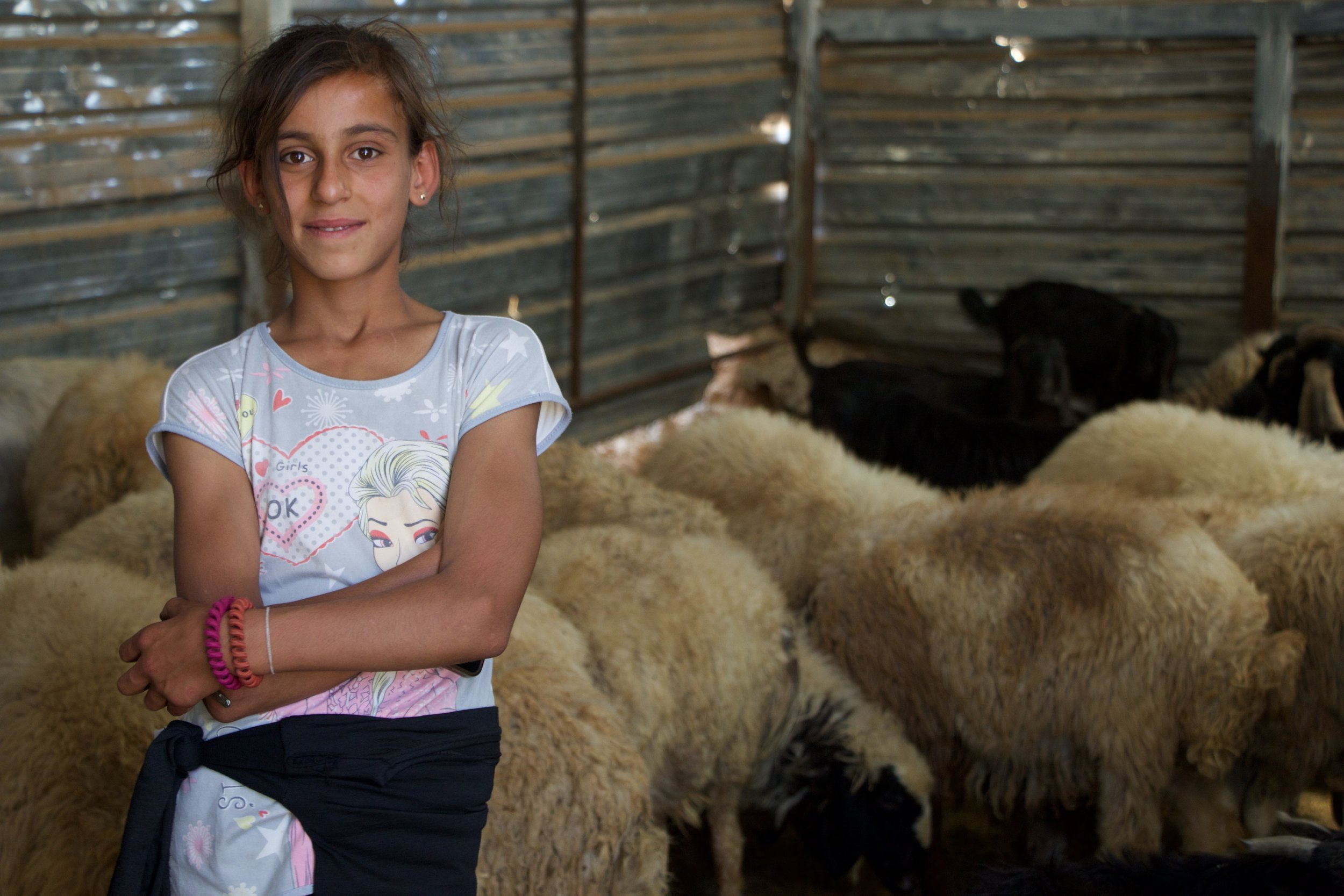 Hiba, 12, with her sheep in Ain Zhalta, Chouf Mountains.