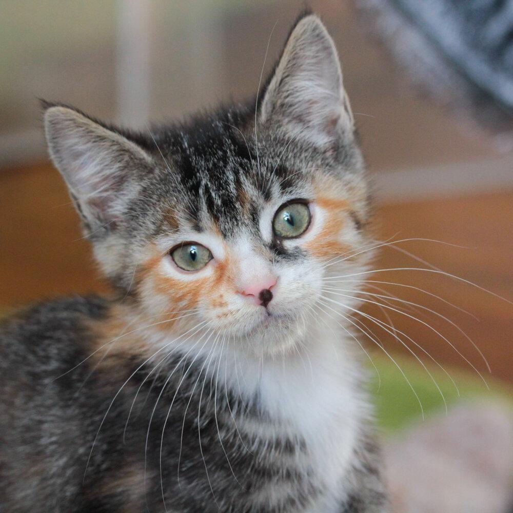 Adopt Henrietta