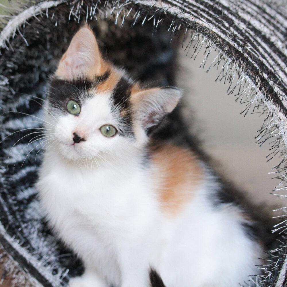 Adopt Dottie