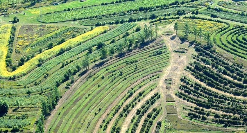 Regenerative Agroforestry Farm - Mark Shepard