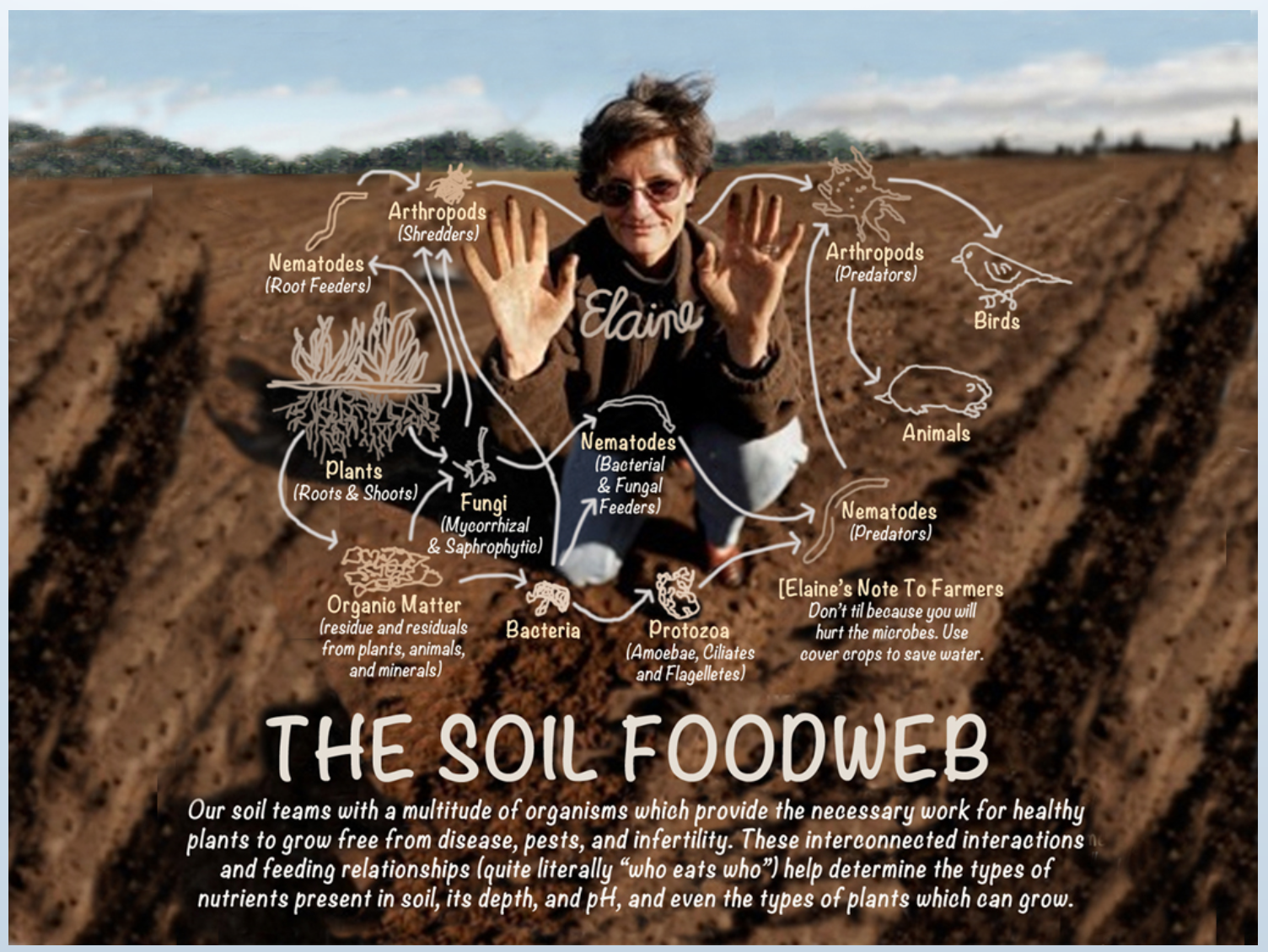 Elaine Ingham - Soil Food Web