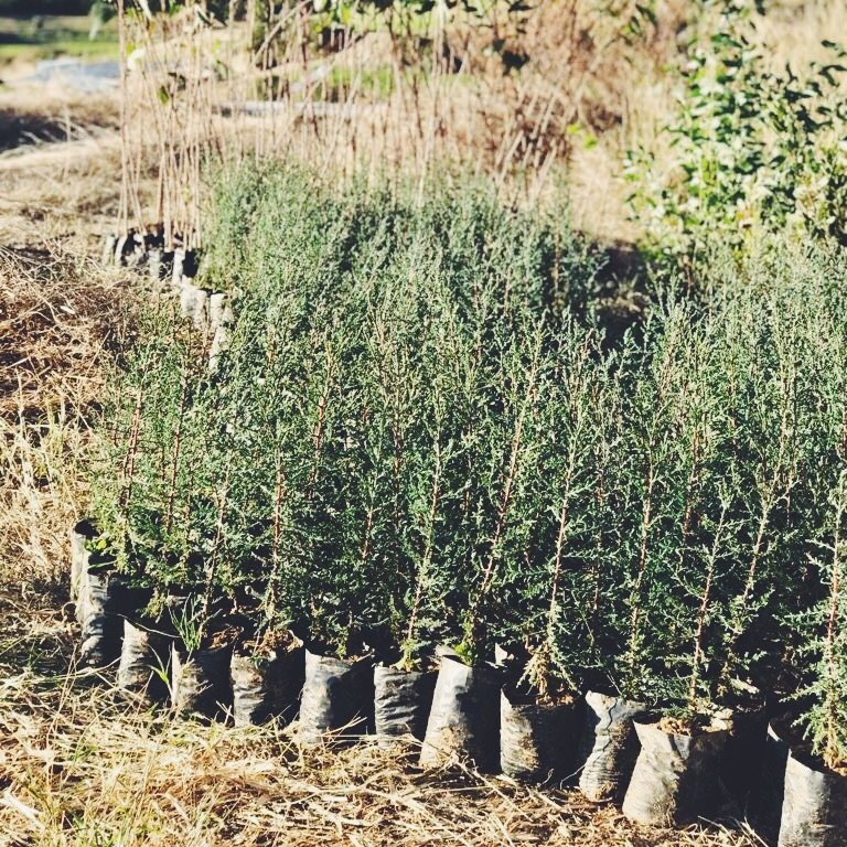 Donate a tree - plant a seed - agroforestry farm