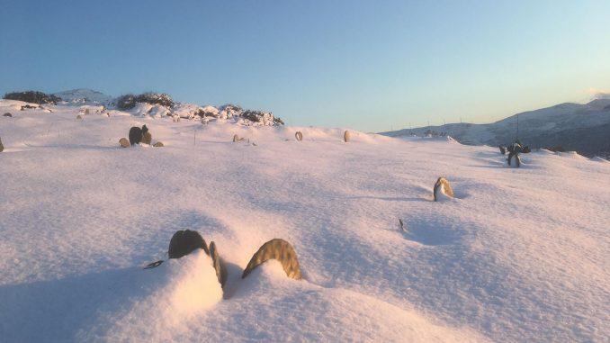 Mazi_farm_snow-678x381.jpg