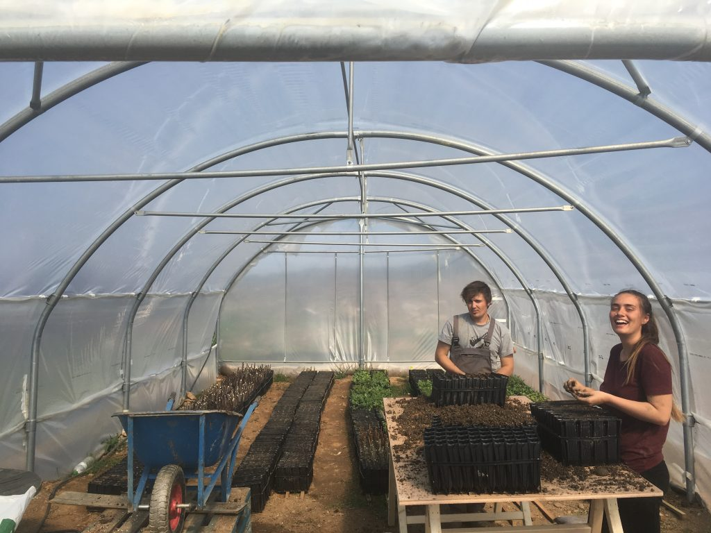 Busy planting a mix of support and productive species in our nursery, including species such as Carob, Eucalyptus, Fig, Oaks and Cypresses. The nursery is a key part of our reforestation strategy on the farm to ensure we have high quality saplings with a high diversity of genetics.