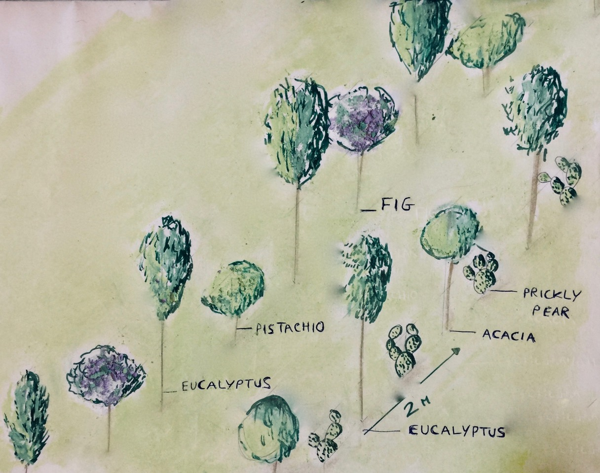 An artistic representation of the stratification of the polyculture in our tree lines, and how these components will all work together in the system.