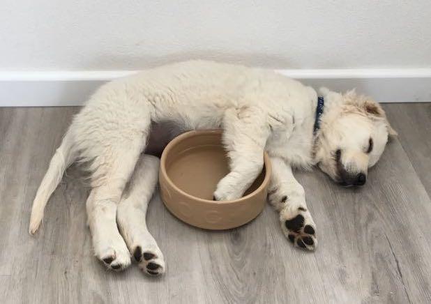 puppy Lara naps.JPG